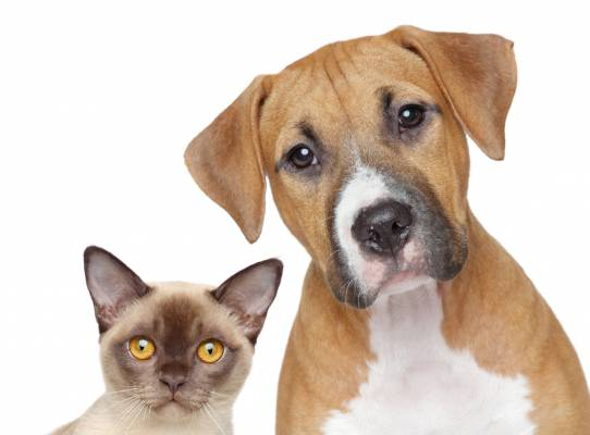 Hollywood FL Vet Offers 5 Steps for Choosing Pet Health Insurance
