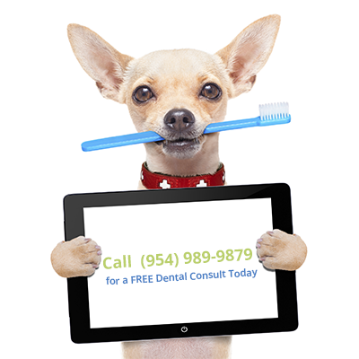 Davie fl pet dentist