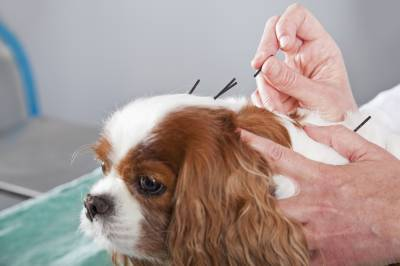 ft lauderdale pet accupuncture