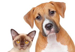 Ft. Lauderdale pet cancer screening