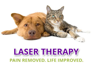 Hollywood FL Pet Laser Therapy